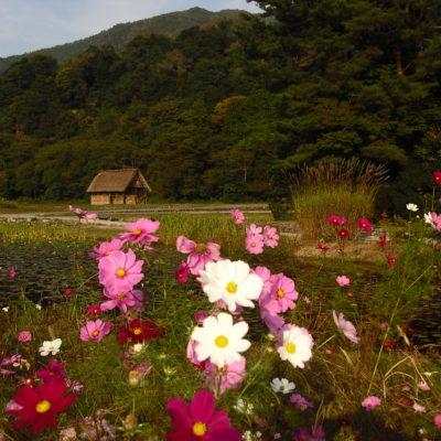Japan, Shirakawa Village