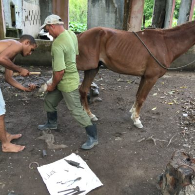 A grandson (left) going about his job of shoeing horses.  Customers ride in from their mountain farms.  The horses return home on rocky trails along the Rio Yara, more sure-footed than ever.