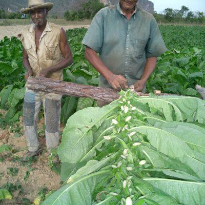 Cuba Tobacco Farmers