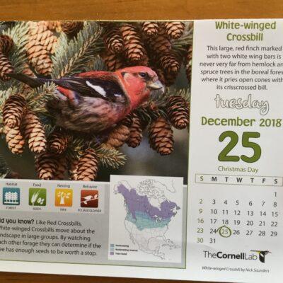 The bird resplendent on Christmas Day
